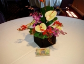 Tropical Centerpiece in Cubed Container