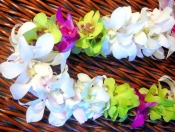 Double White Orchid with Green Dendro and Pink Calypso