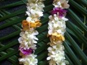 Double white orchid with mixed Mokara Orchids