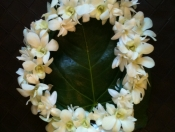 A white 'haku' (head) lei for wedding ceremony