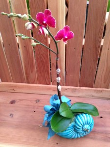 Orchid in blue shell vase
